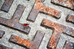The lost of ants Royalty Free Stock Images