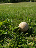 Lost Ball Hidden in the Grass royalty free stock photo