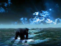Lost bear. A bear, alone on a  little broken iceberg, looking torwards the horizon, in the hope of safety Royalty Free Stock Photo