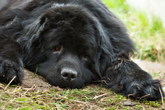 Lost big puppy Stock Images