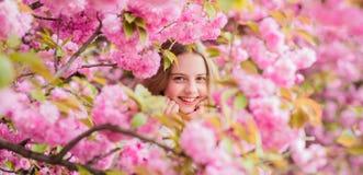 Lost in blossom. Cute child enjoy warm spring day. Tender bloom. Girl tourist posing near sakura. Child on pink flowers. Of sakura tree background. Botany stock photos