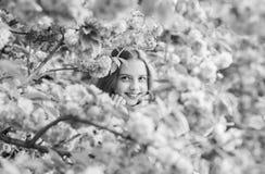 Lost in blossom. Tender bloom. Girl tourist posing near sakura. Child on pink flowers of sakura tree background. Botany royalty free stock photos