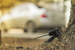 Lost car keys on the fallen needles of blue spruce. back blur background bokeh stock photography