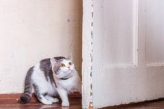 Lost cat fear. Nice home cat near the door fear stock photography