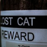 Lost cat sign on a post stock photos