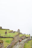 Lost City of Machu Picchu - Peru Royalty Free Stock Image