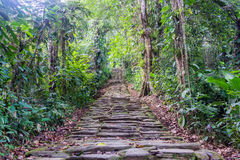 Lost City Stairs. Stone stairs in the jungle at Ciudad Perdida, the lost city of Colombia royalty free stock photo