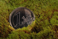 Lost coin lays on a moss. The lost coin lays on a moss. One euro on moss backgrounds royalty free stock images