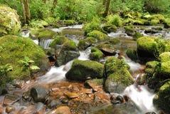 Река Coquille Стоковые Фотографии RF