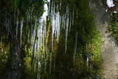 Lost Creek Icicles Royalty Free Stock Photos