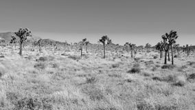 Lost in the Desert B&W stock video footage