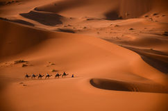 Lost in the desert stock images