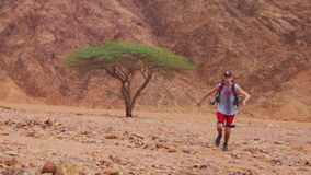 Lost in the Desert Man Runs to the Green Tree and Shade stock video footage