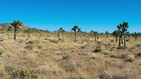 Lost in the Desert stock footage