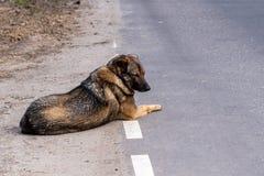Free Lost Dog Lies Roadside Asphalt Road Stock Photos - 181757603