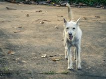 Free Lost Dog On A Dirty White Feather Walking On The Concrete Floor Royalty Free Stock Images - 110813729