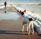 Lost dog on the road Stock Photography