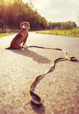 Lost dog sitting on the road alone Stock Photo