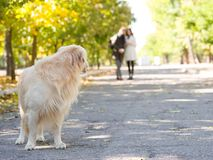 Lost dog.Dog is wait for owners. Couple and the lost dog in the park Stock Image