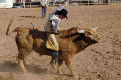 Lost Dutchman Days Rodeo. APACHE JUNCTION, AZ - FEBRUARY 28: A competitor rides a bucking bull in the bull riding competition at the Lost Dutchman Days Rodeo on stock photos