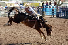 Lost Dutchman Days Rodeo. APACHE JUNCTION, AZ - FEBRUARY 28: A competitor rides a bucking horse in the bareback competition at the Lost Dutchman Days Rodeo on royalty free stock photo