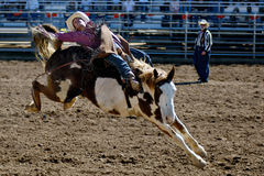 Lost Dutchman Days Rodeo. APACHE JUNCTION, AZ - FEBRUARY 28: A competitor rides a bucking horse in the bareback competition at the Lost Dutchman Days Rodeo on stock photos
