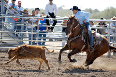 Lost Dutchman Days Rodeo. APACHE JUNCTION, AZ - FEBRUARY 28: A competitor ropes a calf at the Lost Dutchman Days Rodeo on February 28, 2009 in Apache Junction royalty free stock photo