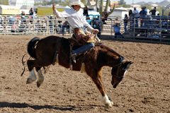 Lost Dutchman Days Rodeo. APACHE JUNCTION, AZ - FEBRUARY 28: A competitor rides a bucking horse in the saddle bronc competition at the Lost Dutchman Days Rodeo royalty free stock photos