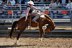 Lost Dutchman Days Rodeo. APACHE JUNCTION, AZ - FEBRUARY 28: A competitor rides a bucking horse in the saddle bronc competition at the Lost Dutchman Days Rodeo stock photo