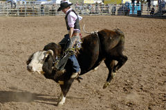 Lost Dutchman Days Rodeo. APACHE JUNCTION, AZ - FEBRUARY 28: A competitor rides a bucking bull in the bull riding competition at the Lost Dutchman Days Rodeo on royalty free stock images