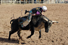 Lost Dutchman Days Rodeo. APACHE JUNCTION, AZ - FEBRUARY 28: A competitor rides a bucking bull in the bull riding competition at the Lost Dutchman Days Rodeo on royalty free stock photo