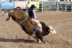 Lost Dutchman Days Rodeo Royalty Free Stock Image