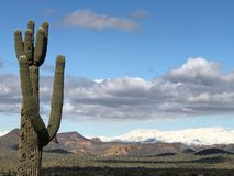 Lost Dutchman State Park. Is a 320-acre state park located near the Superstition Mountains in central Arizona, USA, and named after the Lost Dutchman`s Gold royalty free stock photos