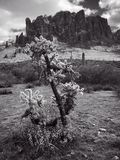 Lost Dutchman State Park stock photography