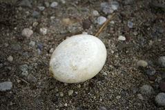 Lost egg Stock Photography