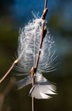 The lost feather. In a spring wood Stock Photo
