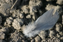 Lost Feather. Down feather on plough land stock photography