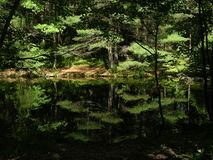 Lost forest pond, somewhere in Russia, summer. Russian Nature - Lost forest pond, somewhere in Russia, summer stock photography