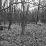 Lost Forrest. Wetlands Enchanted Black Stock Photo