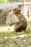 Lost friend. I do not see monkeys scare Stock Photography