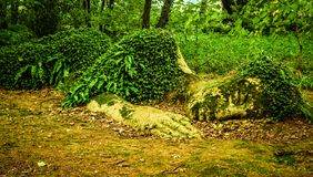The Lost Gardens of Heligan in Cornwall - CORNWALL, ENGLAND - AUGUST 12, 2018