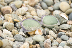 Lost glasses on beach Royalty Free Stock Photos
