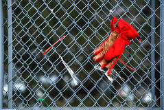 Lost Glove. Hangs from chain link fence waiting to be reclaimed Royalty Free Stock Photo