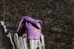 Lost glove in the woods stock photography