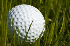 Lost golf ball Stock Image