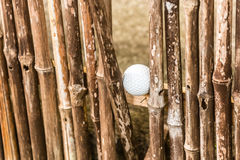 Lost golf ball. Golf ball stucked between bamboo sticks in bamboo fence Royalty Free Stock Photography