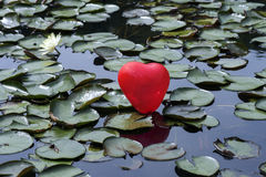 Lost heart on the lake, between water lilies Stock Photo
