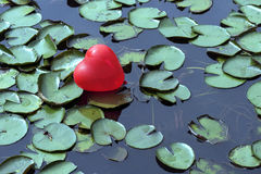 Lost heart on the lake, between water lilies Royalty Free Stock Photo