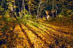 Lost house in the autumn forest Stock Photography