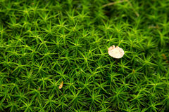 Lost In Moss Royalty Free Stock Images